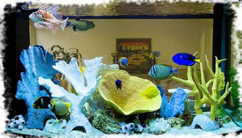 оформление морского аквариума