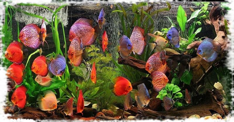 оформление цихлового аквариума