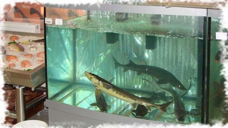 промышленный аквариум