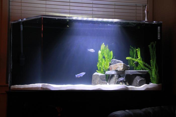 оформление аквариума 200 литров