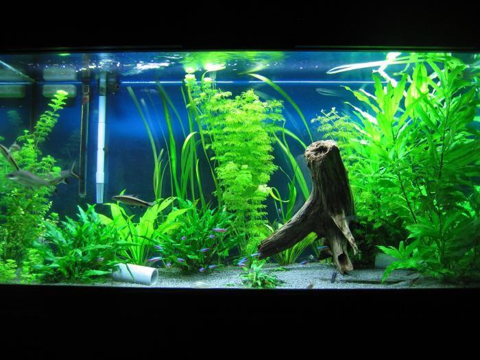 аквариум оформление своими руками