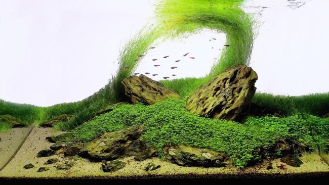 аквариумные фото