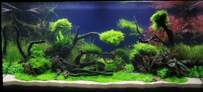 Дизайн аквариумного пространства.