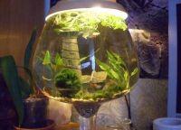 Оформление аквариума своими руками2