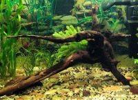 Оформление аквариума своими руками8