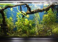 Оформление аквариума своими руками9