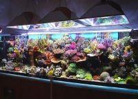 Оформление аквариума своими руками14