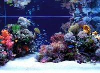Оформление аквариума своими руками15