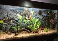 Оформление аквариума своими руками17