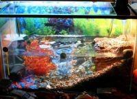 Оформление аквариума своими руками19