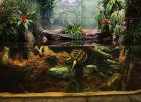 Оформление аквариума своими руками20