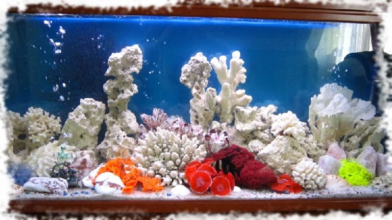 оформление аквариума псевдоморе