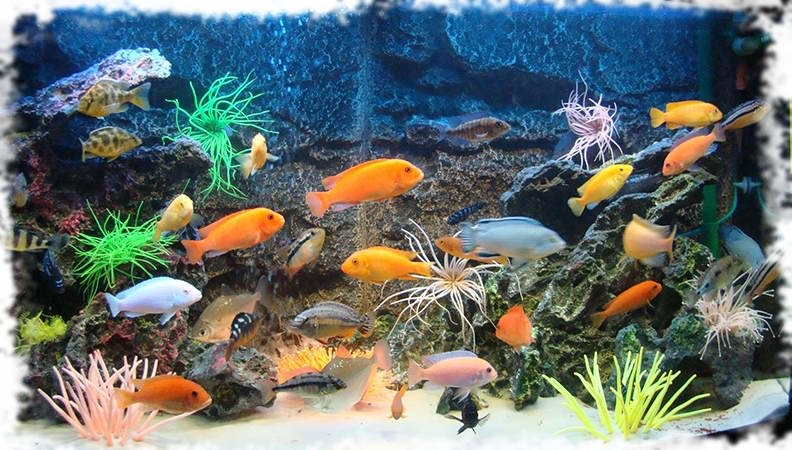 оформление аквариума морское дно