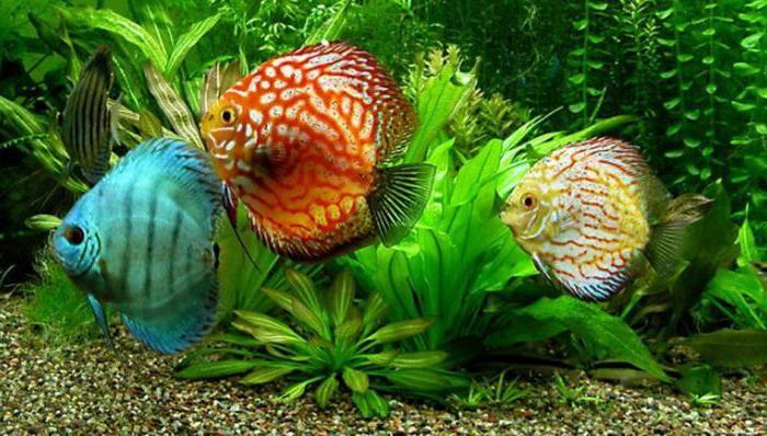 какие имена можно дать рыбкам