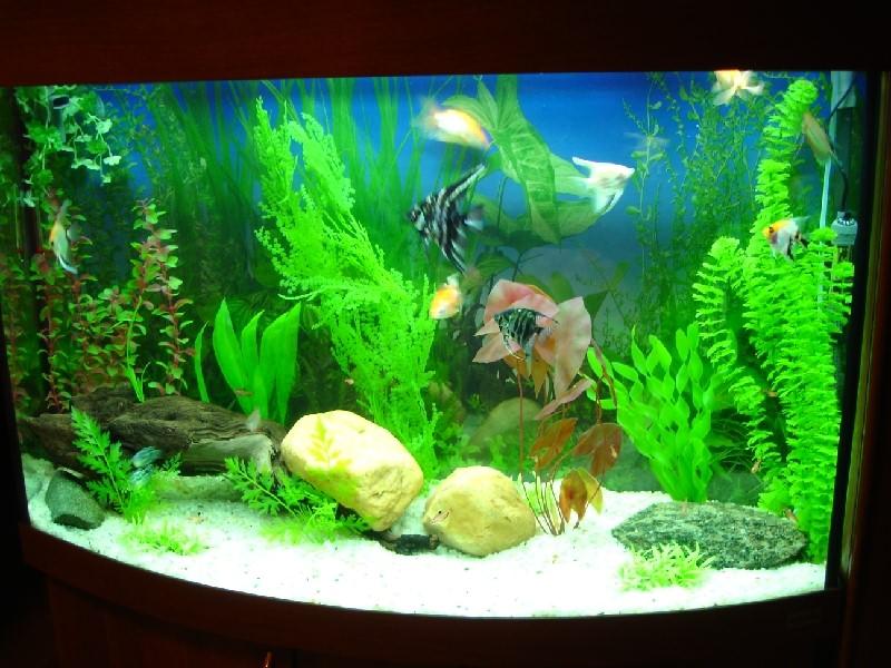 аквариум с сочетанием водорослей