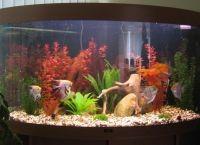 Искусственные растения для аквариума2