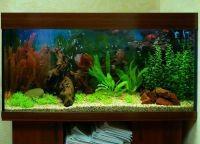 Искусственные растения для аквариума3