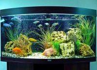 Искусственные растения для аквариума4