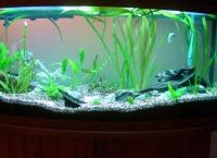 Искусственные растения для аквариума5