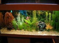Искусственные растения для аквариума6