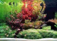 Искусственные растения для аквариума9