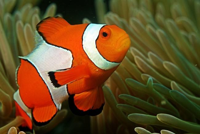 Удивительные рыбы рыбы, удивительно, интересное, познавательно