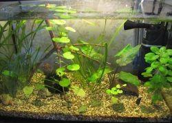 аквариумный компрессор1