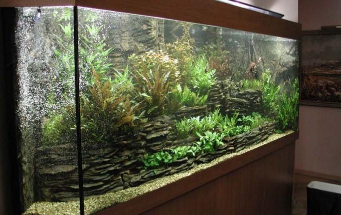 Как избавиться от водорослей