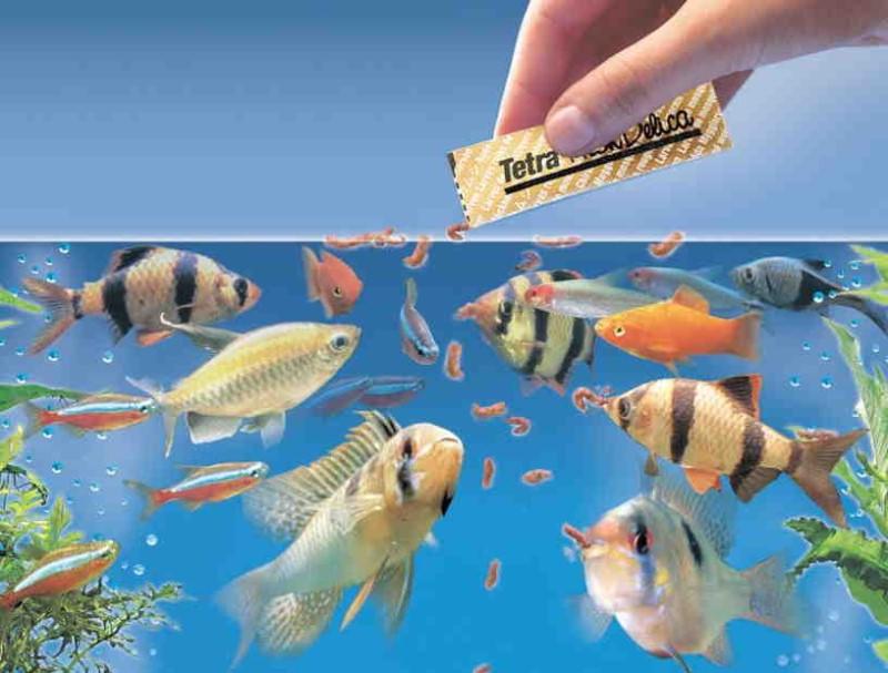 кормят рыб