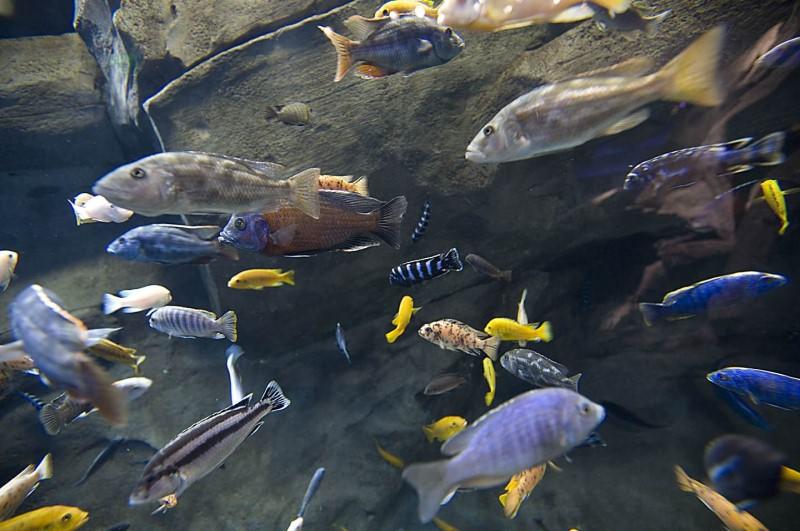 стая разных рыб