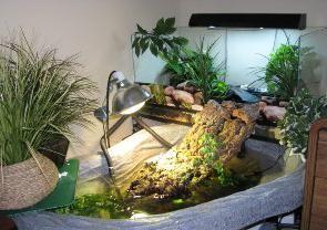 уход за водяной черепахой в домашних условиях