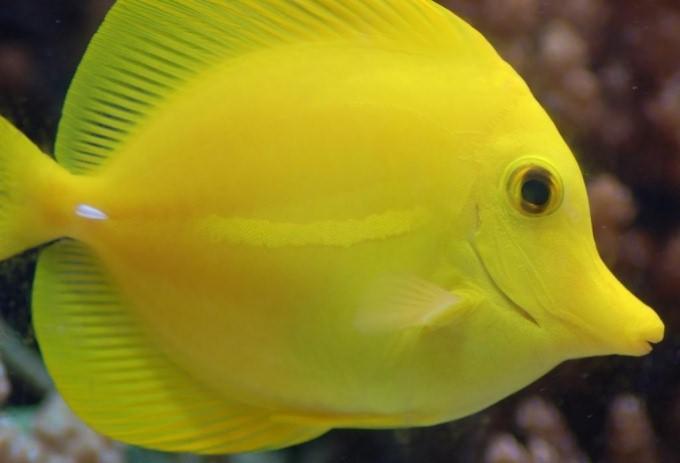 как отучить рыбок от живого корма