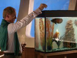 Как кормить рыбок в аквариуме1