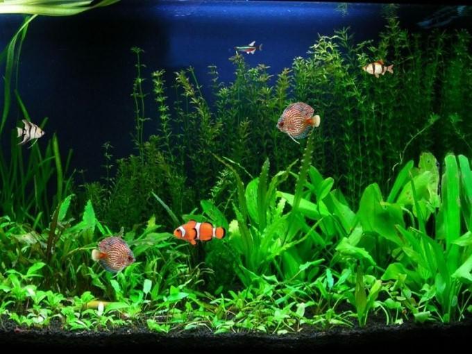 Как нужно менять воду в аквариуме