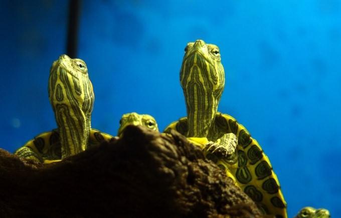 чем слить воду из аквариума черепах