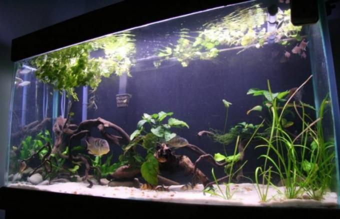 как поменять воду в аквариуме не вытаскивая рыбок