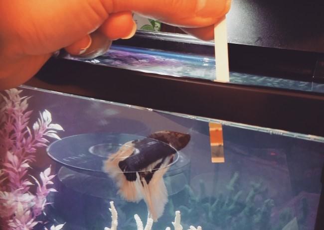 Тест аквариумной воды.