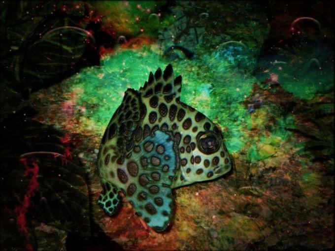 Как прикрепить фон для аквариума
