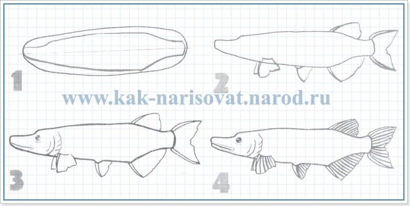 Как рисовать рыбок