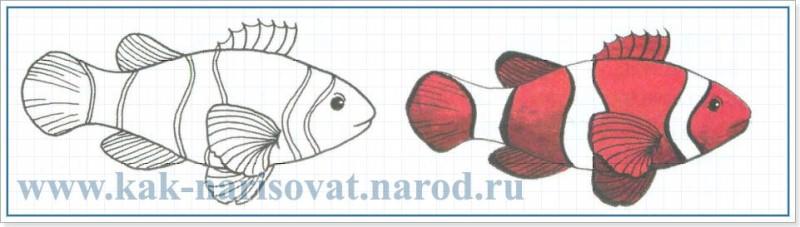 Рыбка клоун - как нарисовать