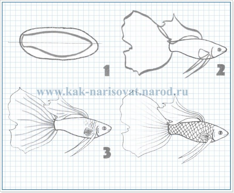 Как рисовать гуппи
