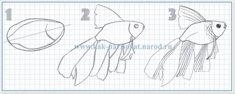 учимся рисовать золотую рыбку