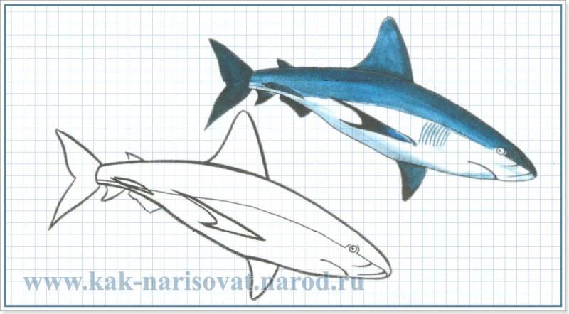 рисовать акулу