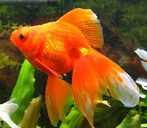 Золотая рыбка исполнит ваши желания