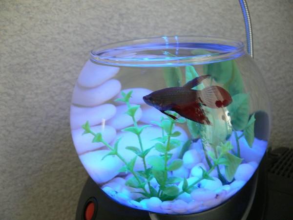 содержание маленького аквариума