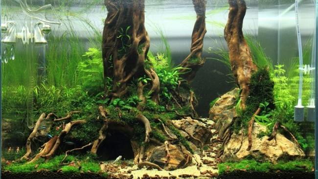 Дизайн аквариума с помощью коряг.