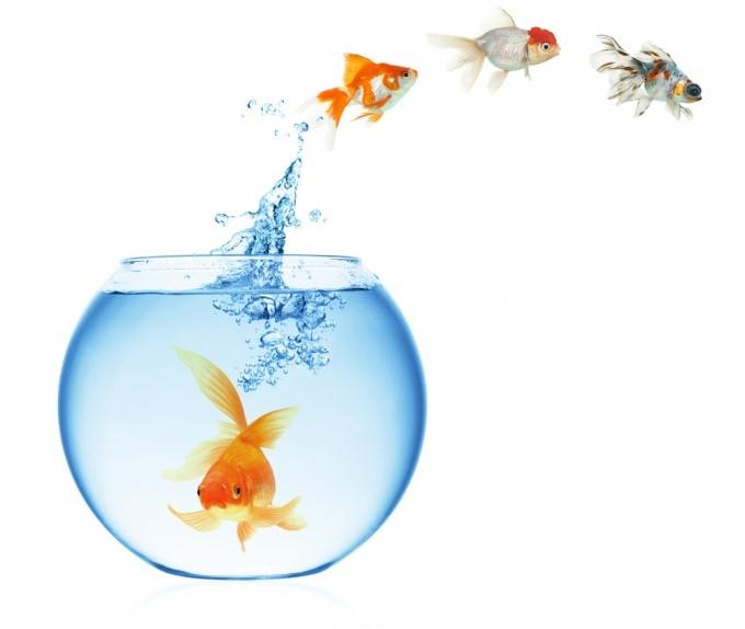 как почистить аквариум