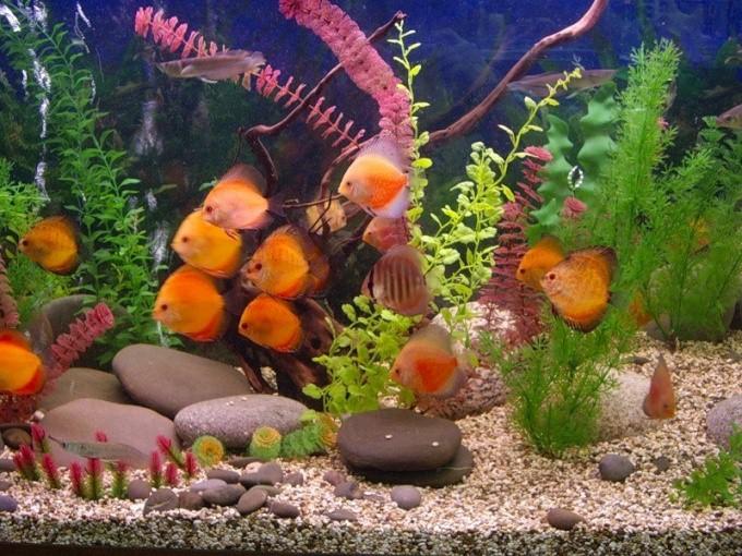 как часто чистить аквариум 10 литров