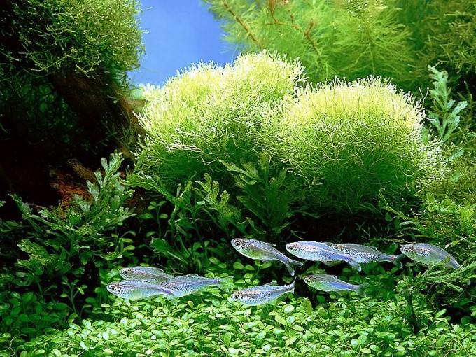 как чистить аквариум не вытаскивая рыбак