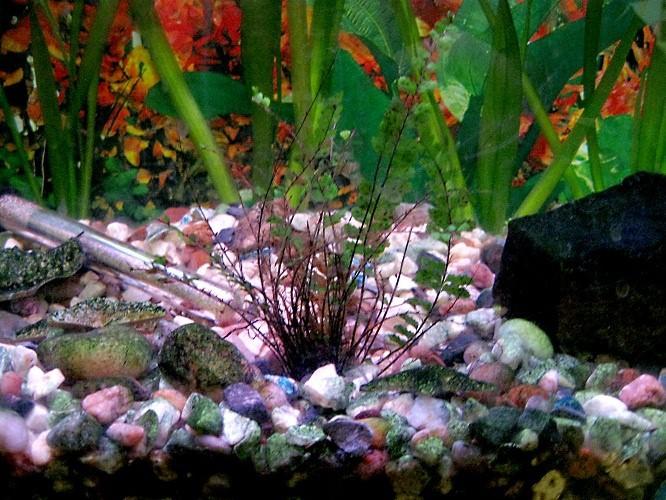 как избавиться от мутной воды в аквариуме?